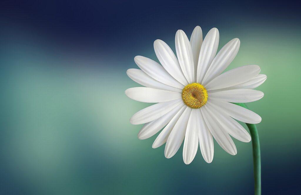 mri case hypnosis audio daisy