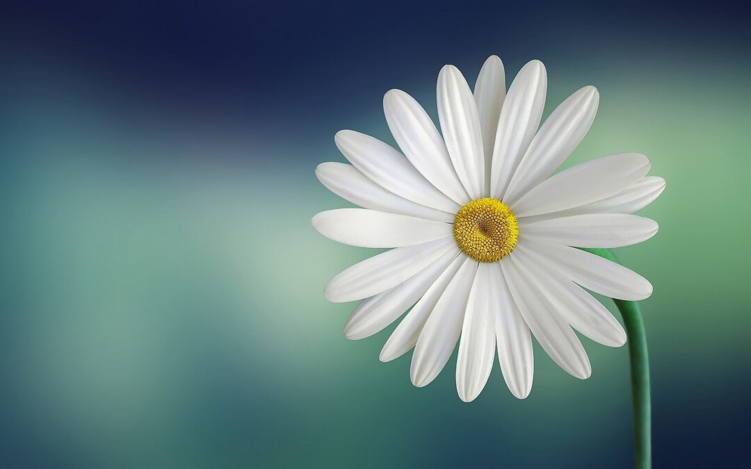 mri care hypnosis audio daisy